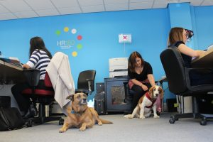 HR180 office dogs